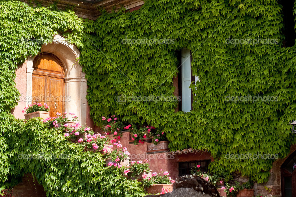 A wooden door and ivy