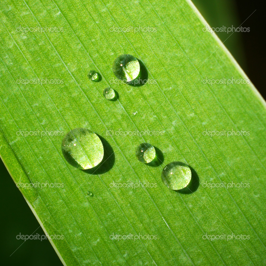 Macro of dew on green leaf