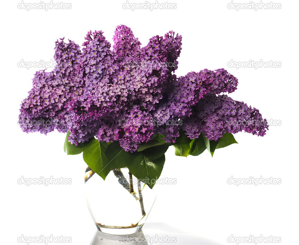 Lilac bouquet isolated on white