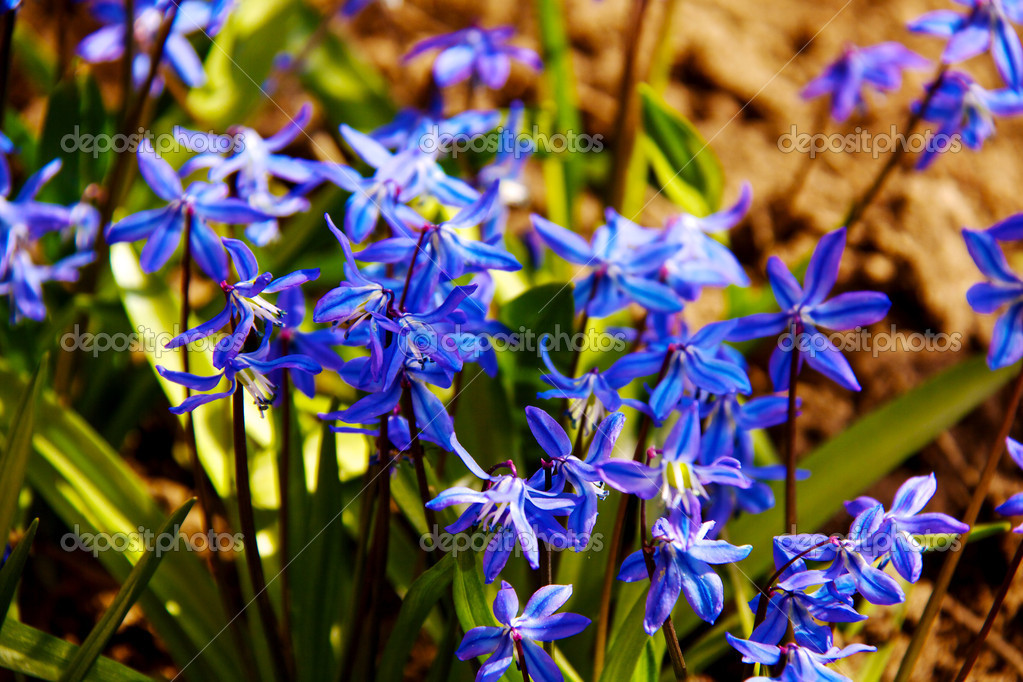 Floral background of first spring flowers close