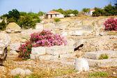 archeologických vykopávek na apollo temple, corinth, Řecko.