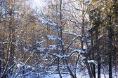paesaggio boschivo invernale
