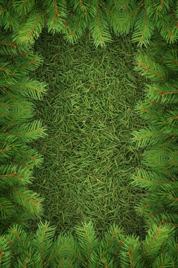 Christmas spruce texture