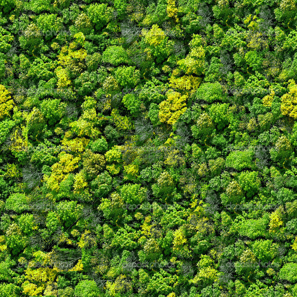 Фото лес фон