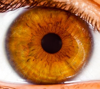 Human eye close up ...