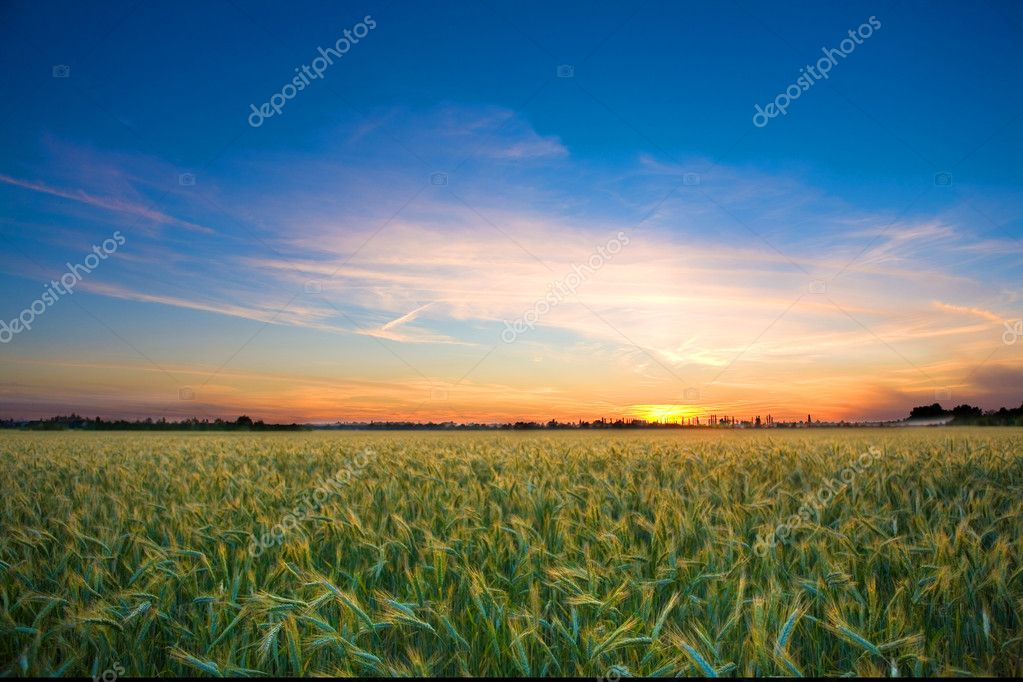 Фотообои Photo of a landscape with a brilliantly detailed foreground and