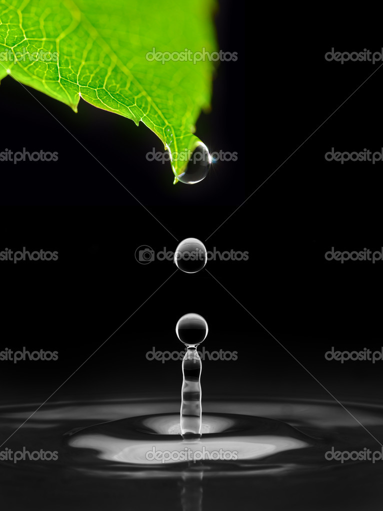 Water drops falling down from green leaf, isolated on black