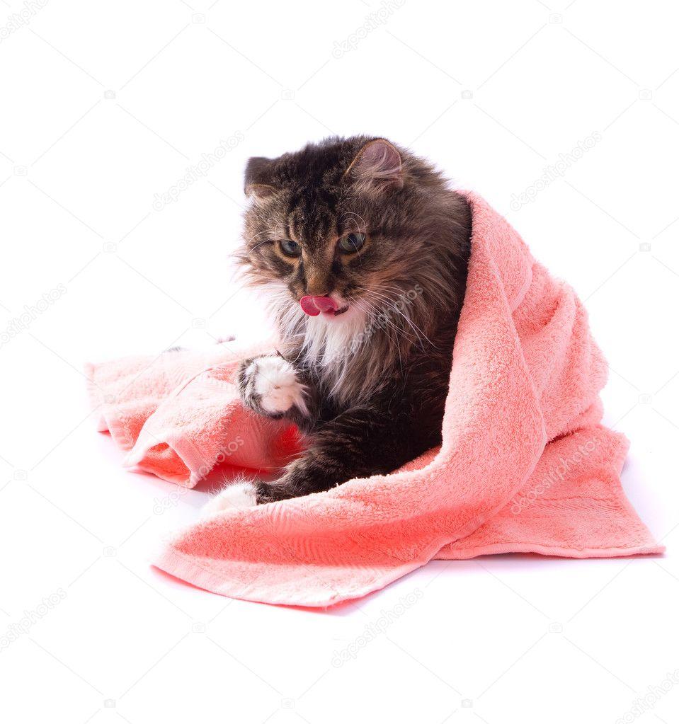 Votre chat se gratte ou se lèche de façon excessive.