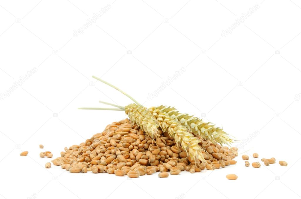 Pile of Wheat Grains with Ears