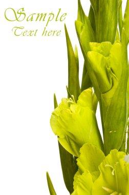 Gladiolus bouquet stock vector