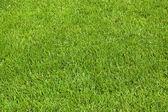 Fotografie trávu na louce