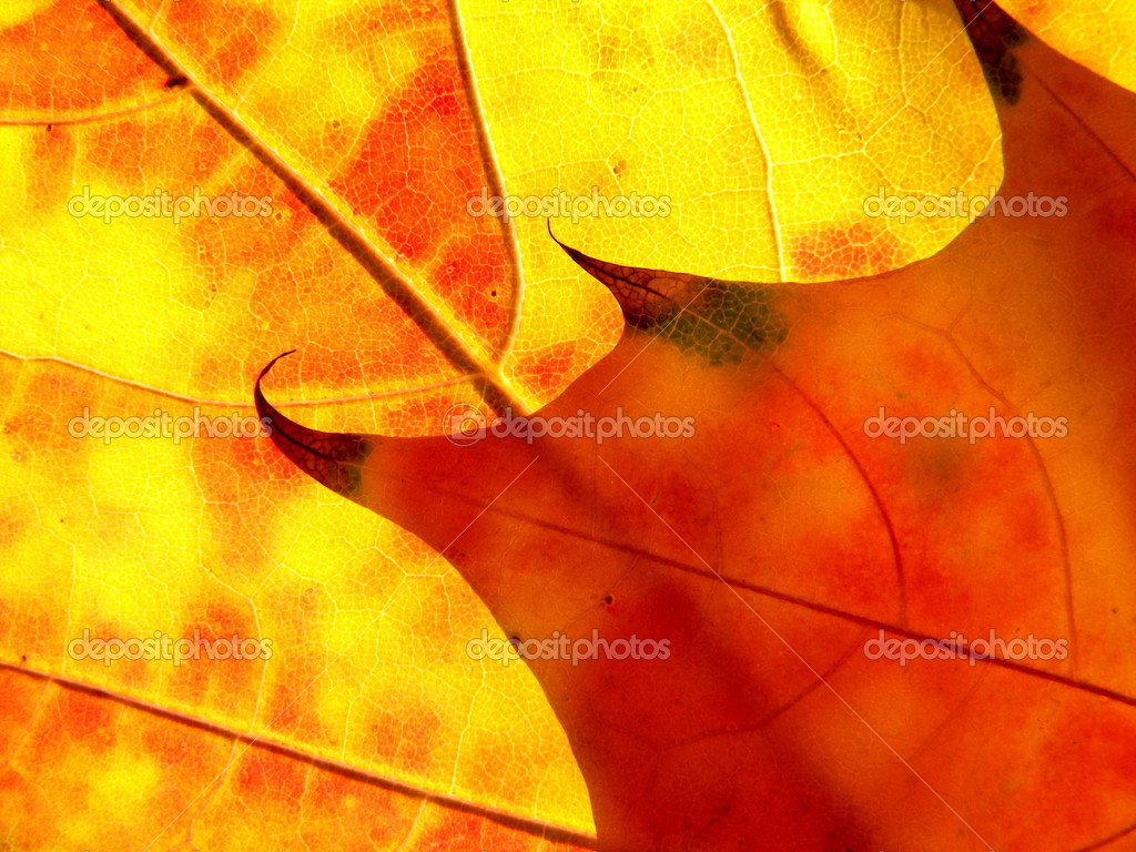 Orange and red leaves like flame