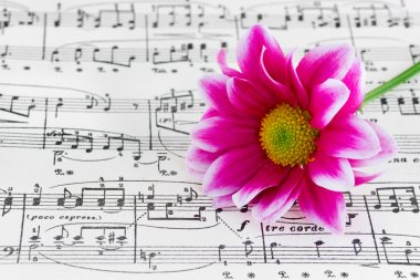 Flower on sheet music