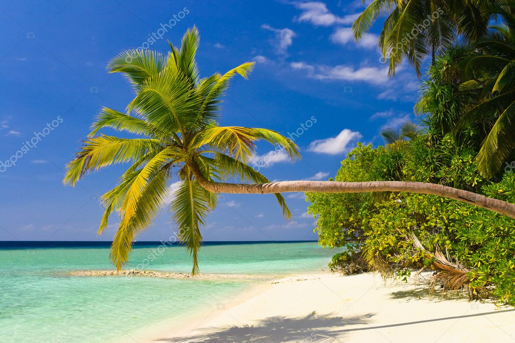Bending palm tree on tropical beach