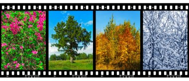 Nature seasons in film frames (my photos)