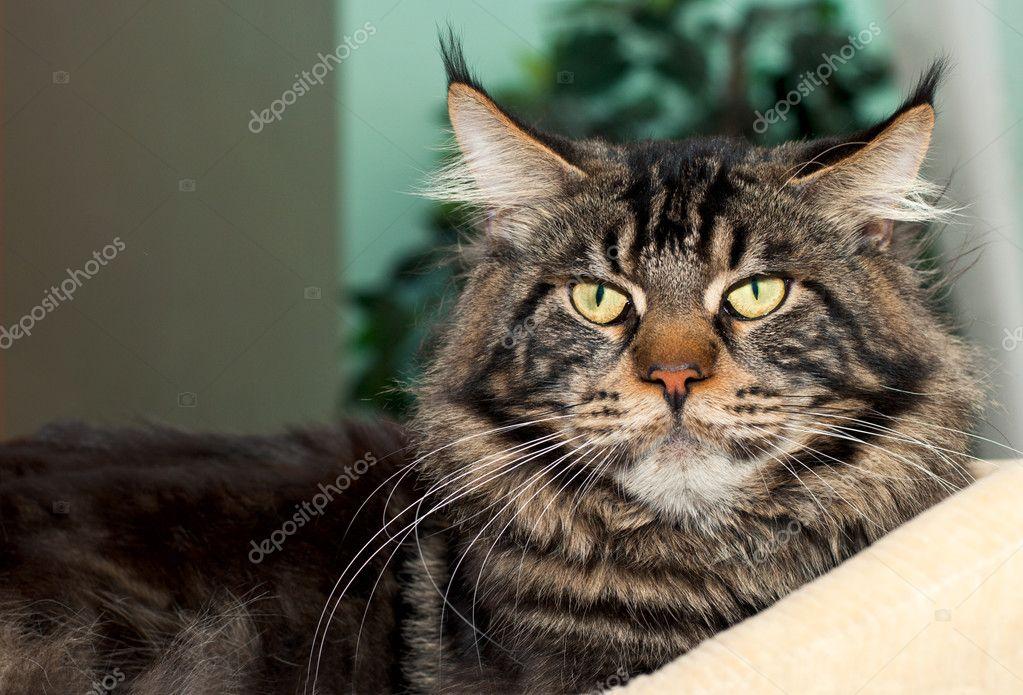Obrázky těsných koček