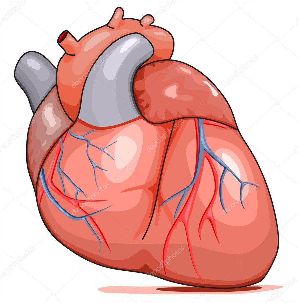corazón humano — Vector de stock © rejects #3414271