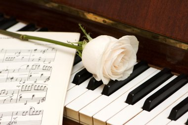 White rose over music sheets and piano