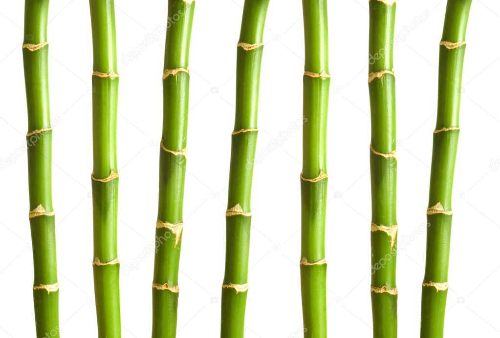Bamboo branches isolated on the white