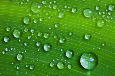 Water drops on a green leaf.