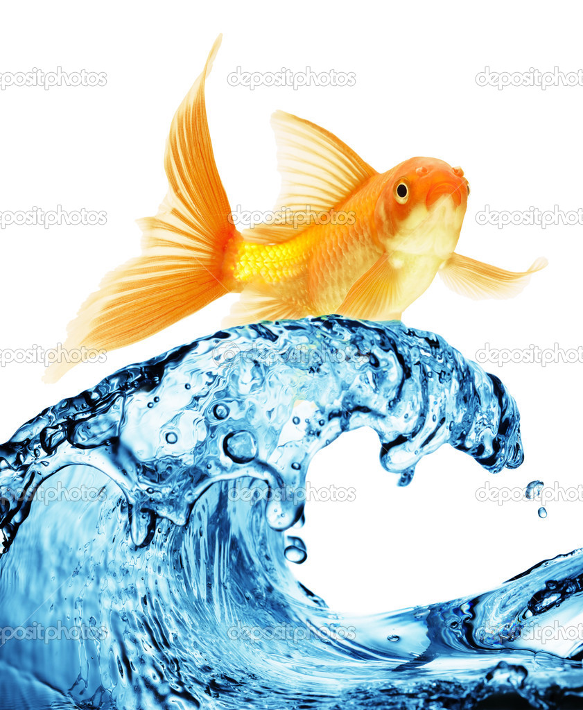 Goldfish jumping out of the water stock photo irochka for Poisson rouge