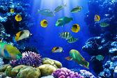 Fotografie Coral reef
