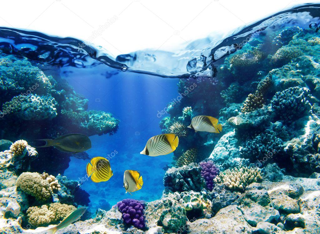 Фотообои Coral reef