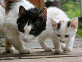 Fényképek macska és cica