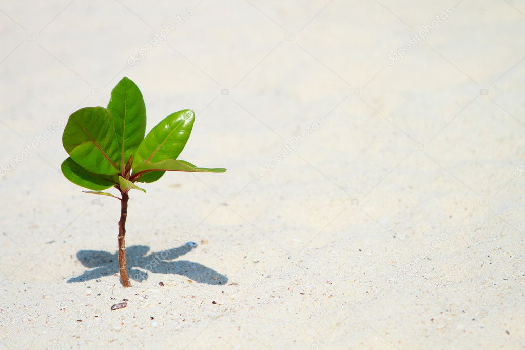 Young plant growing on beach