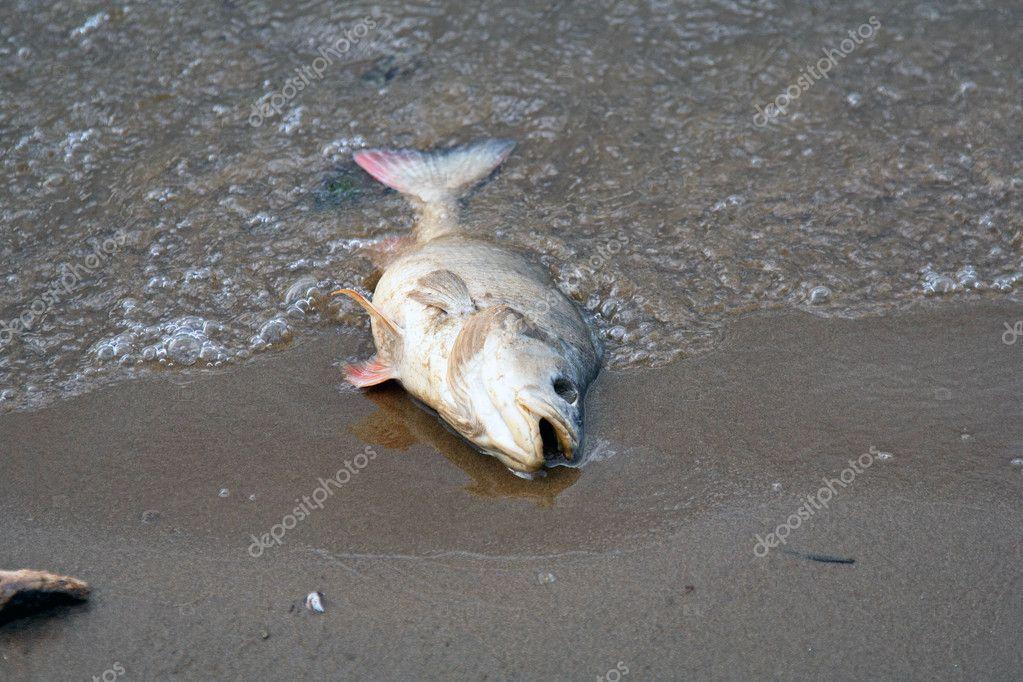 Dead perch
