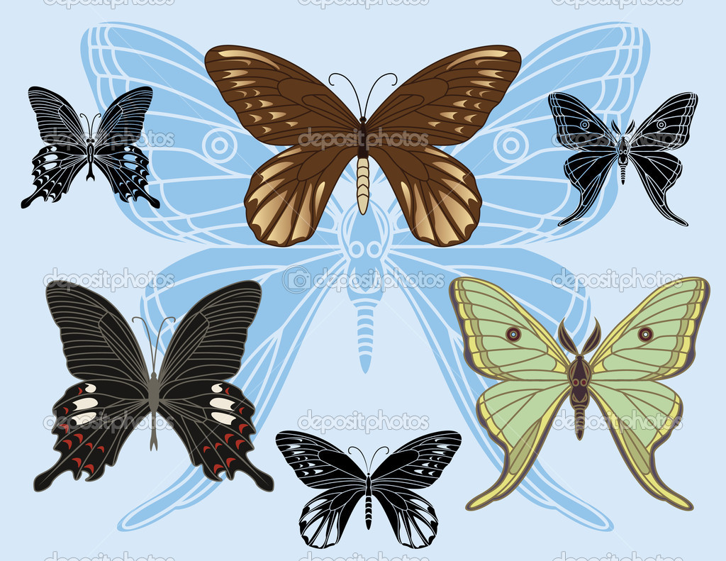 set of colored butterflies and stencils u2014 stock vector