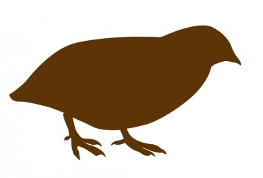 Vector silhouette of the quail on white background