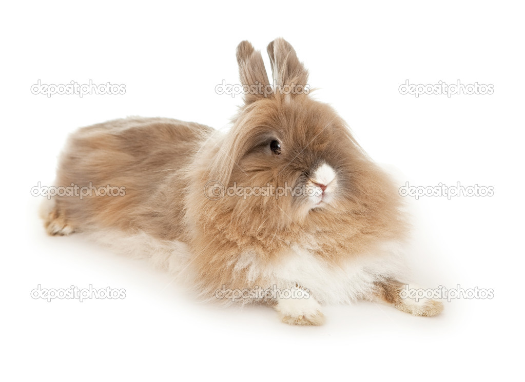 Lionhead Rabbit — Stock Photo © Yykkaa #3797655. Colorado State Online Classes. Clinical Psychology Phd Online. Sell Orange Lake Timeshare What Is A Postcard. First National Bank Personal Loans. Replacement Coverage On Homeowners Insurance. Active Directory Object Classes. Organizational Charting Software. Freelancing Software Projects