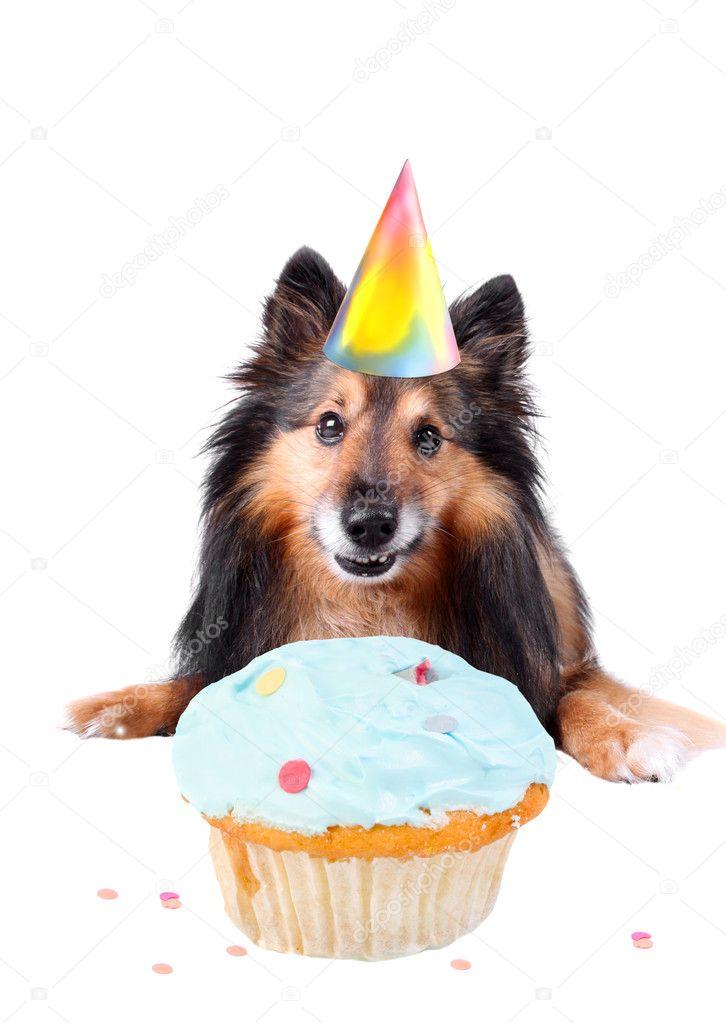 Hond Verjaardag Stockfoto C Gvictoria 3186389