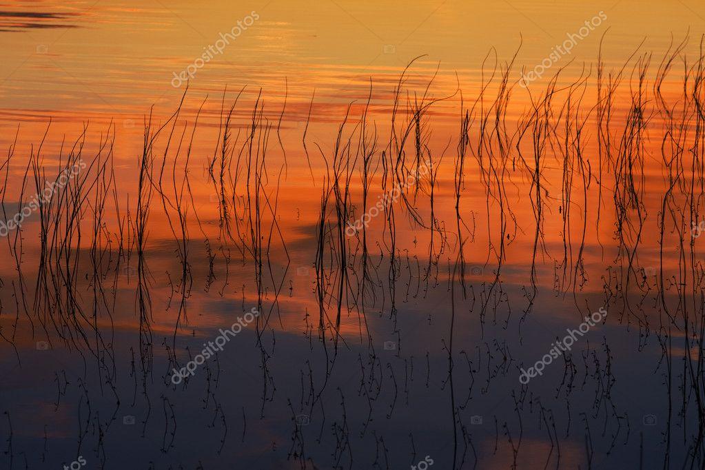 Coast of wood lake
