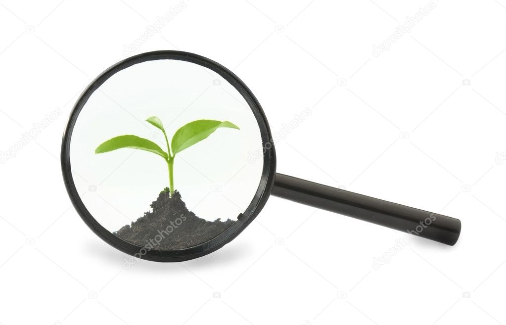 Seedling of a magnifying glass