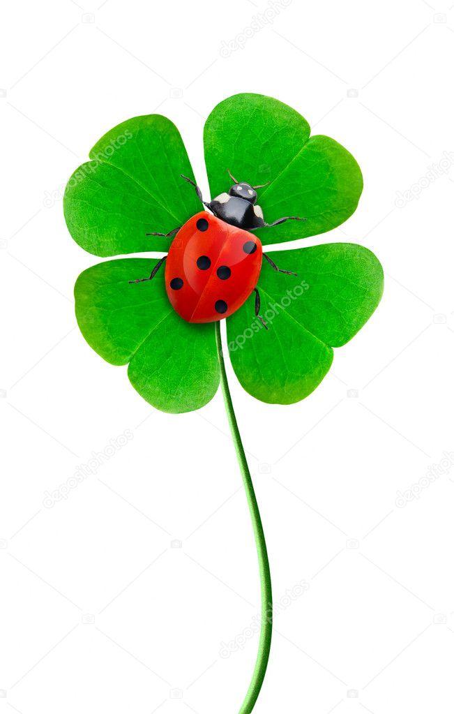 Coccinella su un quadrifoglio foto stock stanod 3297683 - Immagini di quadrifoglio a quattro foglie ...