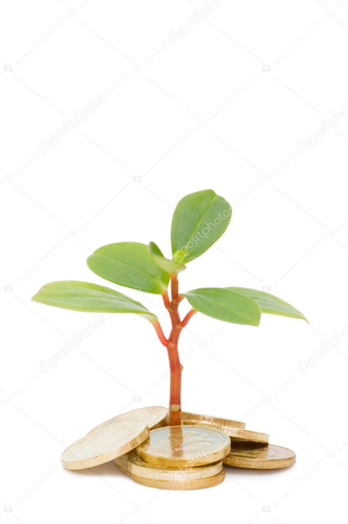 Young plant and coins isolated
