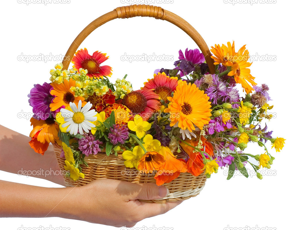 Beautiful flowers in a basket isolated on white stock photo beautiful flowers in a basket isolated on white photo by voronin 76 izmirmasajfo