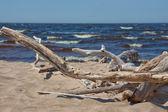 Fotografie strand der ostsee