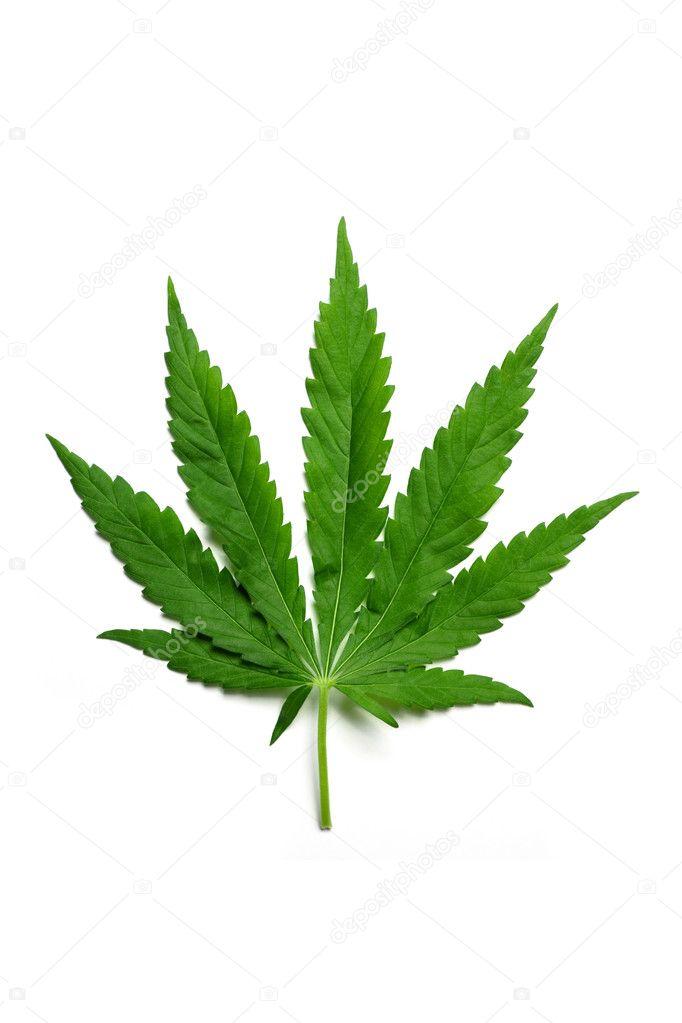 Hemp leaf
