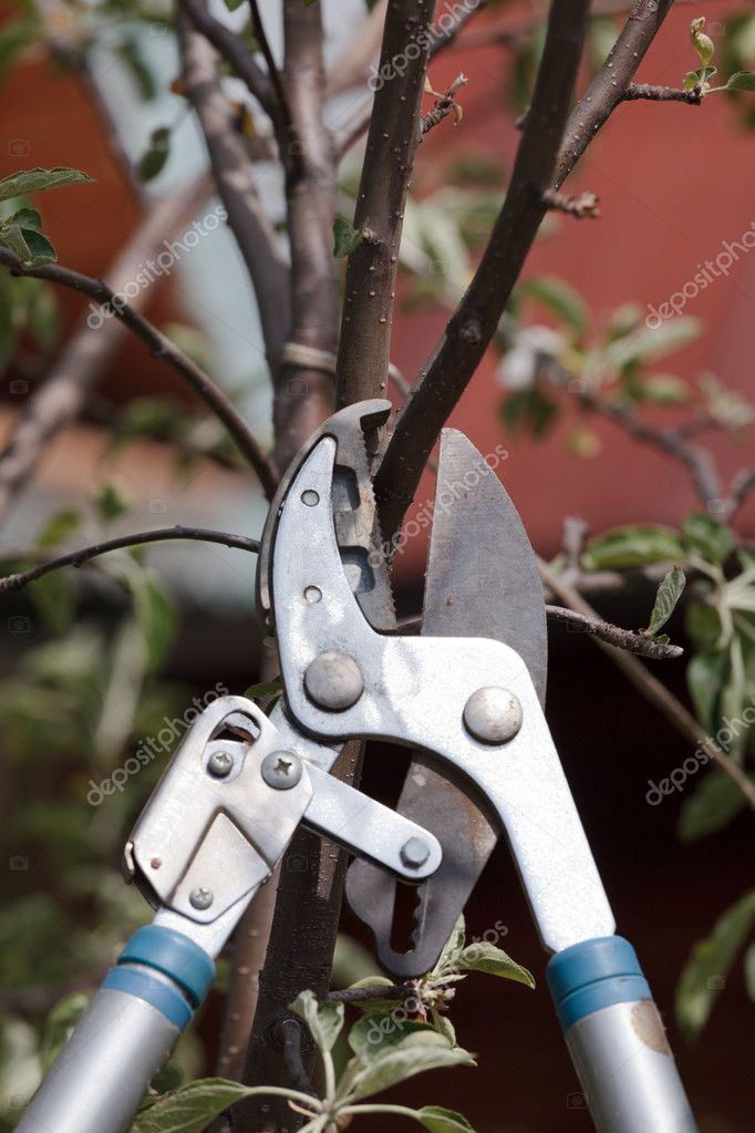 Trimming a tree twig