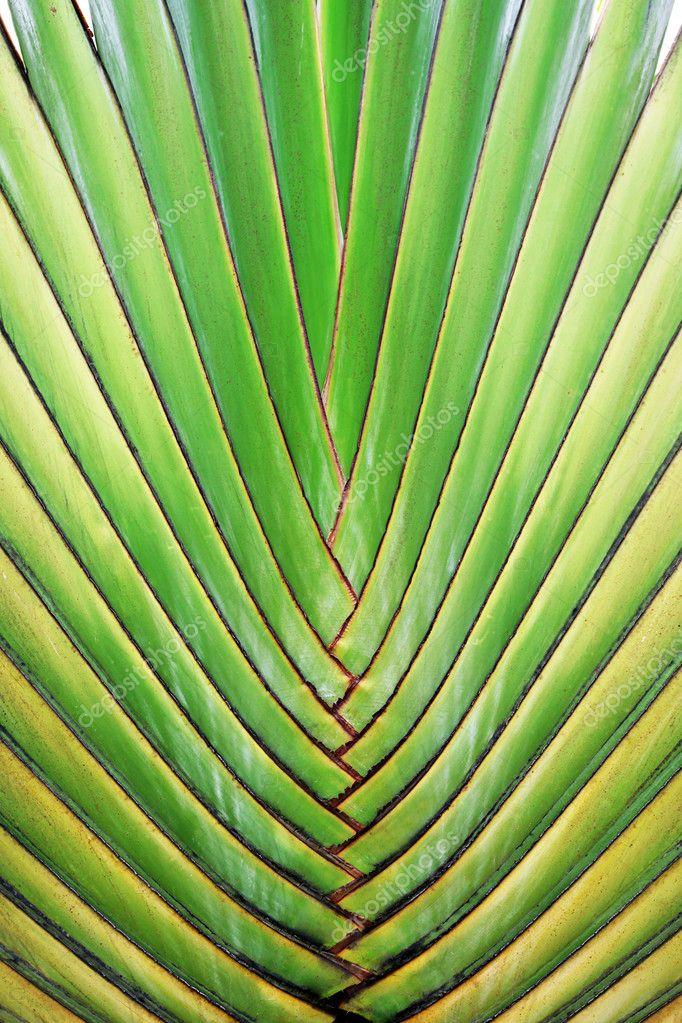 Big palm tree leaf