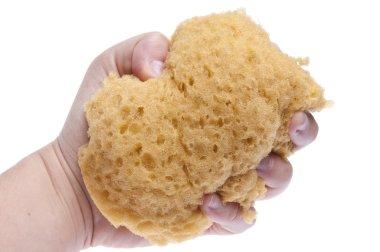 Hand Squeezing Sponge