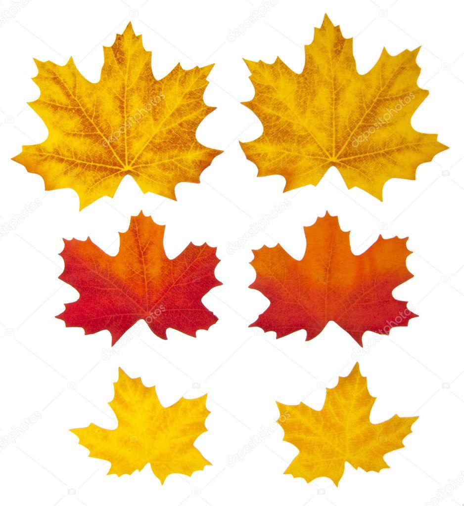 Las hojas de oto o en blanco foto de stock - Descargar autumn leaves ...