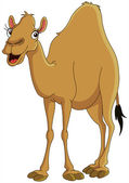 Photo Camel