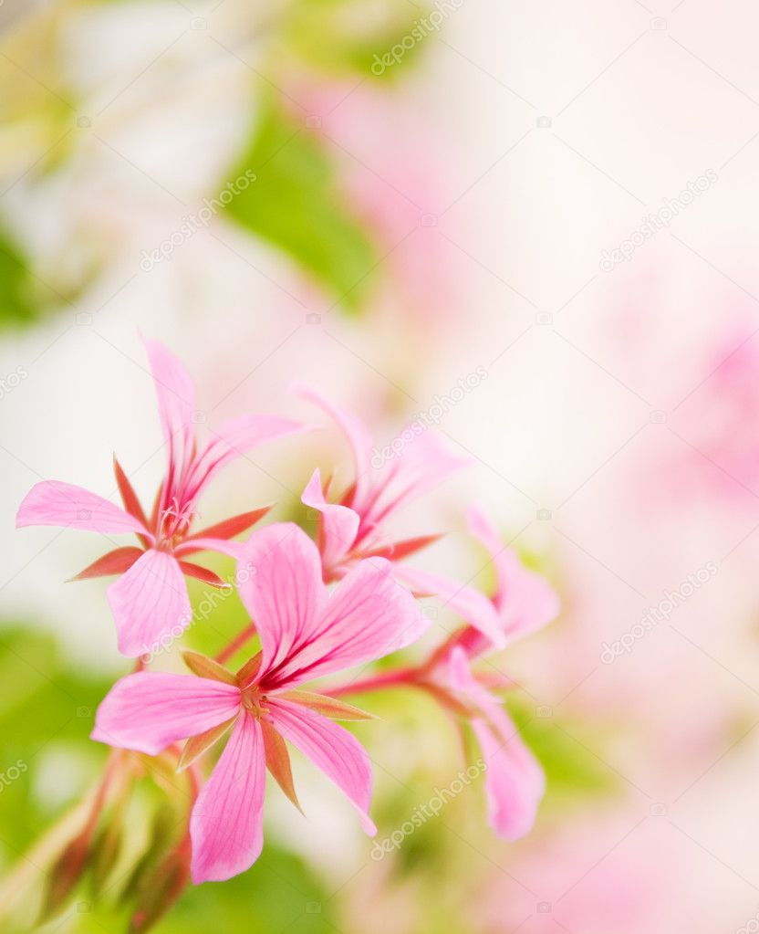 Beautiful flowers with nice defocused background stock photo beautiful flowers with nice defocused background photo by nejron izmirmasajfo