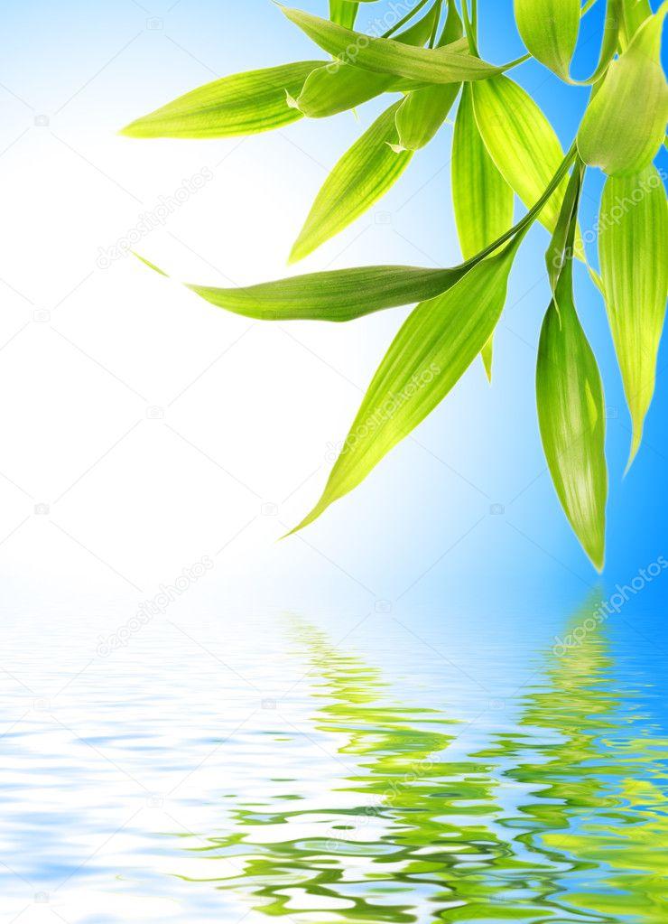 bambou laisse r fl chie dans l 39 eau rendue photographie nejron 4839605. Black Bedroom Furniture Sets. Home Design Ideas