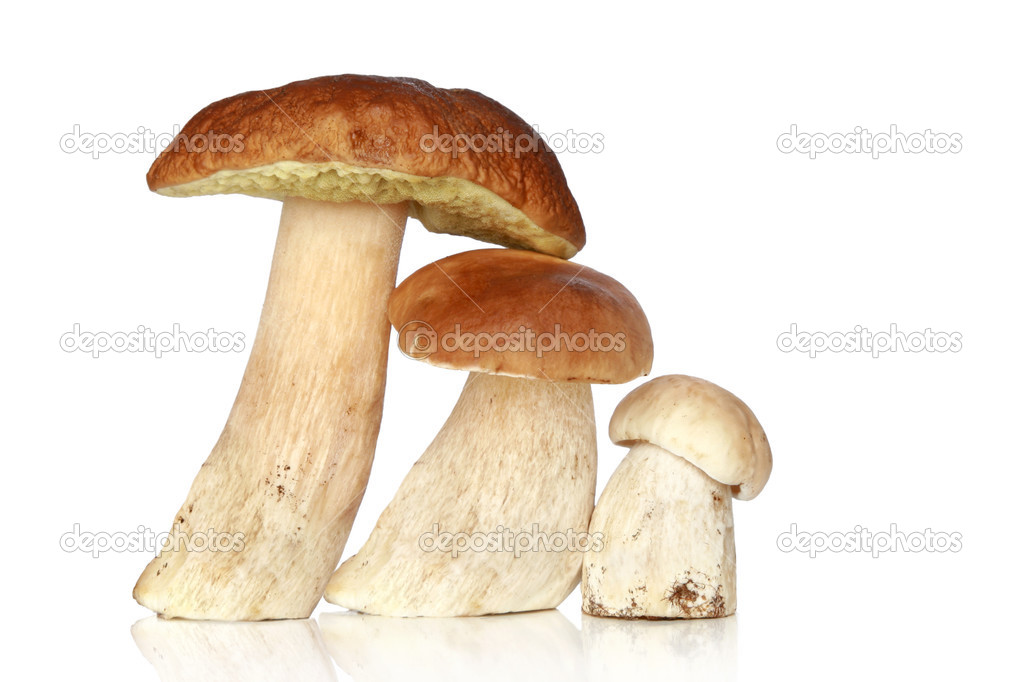 Three forest mushrooms, on a white background