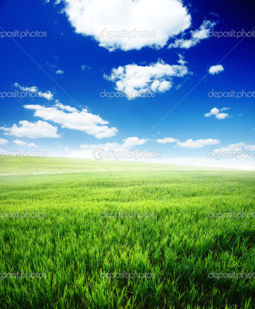 Spring morning... field of green grass and blue cloudy sky